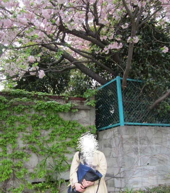 桜とにゃんた